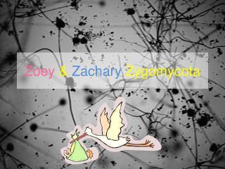 Zoey & Zachary Zygomycota