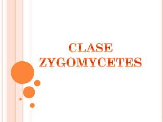 CLASE ZYGOMYCETES