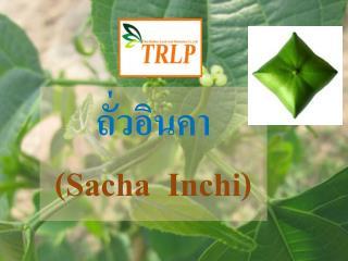 ถั่วอินคา ( Sacha I nchi )