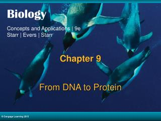 From DNA to Protein