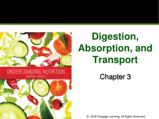 DIGESTION  ABSORPTION