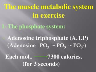 The muscle metabolic system in exercise  1- The phosphate system: