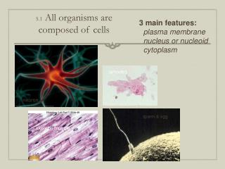 5.1  All organisms are  composed of cells