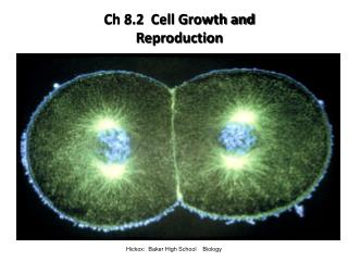 Ch 8.2  Cell Growth and Reproduction