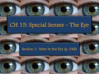 CH 15: Special Senses – The Eye