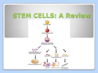 STEM CELLS: A Review