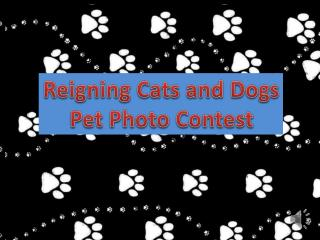 Reigning Cats and Dogs Pet Photo Contest