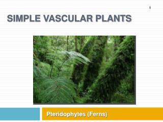 Simple Vascular Plants