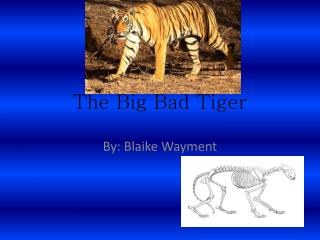 The Big Bad Tiger