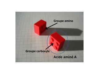 Groupe carboxyle