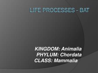 Life Processes -  Bat