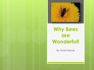 Why Bees are Wonderful!