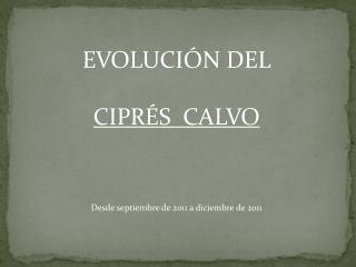 EVOLUCIÓN DEL  CIPRÉS  CALVO Desde septiembre de 2011 a diciembre de  2011
