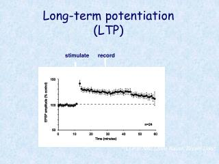 Long-term potentiation (LTP)