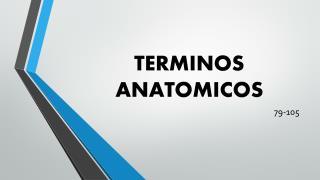 TERMINOS ANATOMICOS