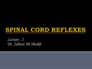SPINAL CORD REFLEXES