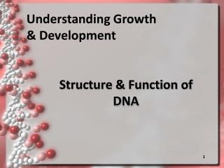 Structure & Function of DNA