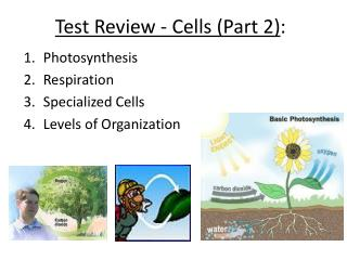 Test Review - Cells (Part 2 ) :