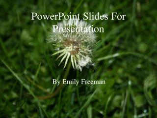 PowerPoint Slides For Presentation