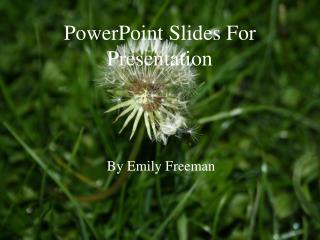 PowerPoint Slides For Presentation