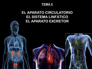 TEMA 5 EL APARATO CIRCULATORIO EL SISTEMA  LINFÁTICO EL APARATO EXCRETOR