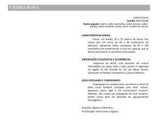 CEDRO-ROSA