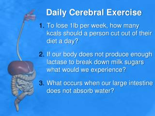 Daily  Cerebral Exercise