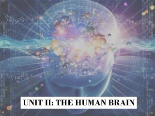UNIT II: THE HUMAN BRAIN