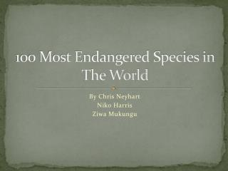 100 Most Endangered Species in The World