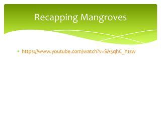 Recapping Mangroves