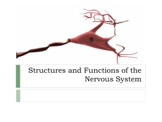 Structures and Functions of the Nervous System