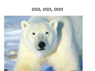 o so ,  oso ,  ooo