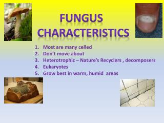 Fungus   Characteristics