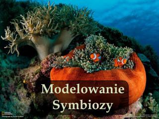 Modelowanie   Symbiozy