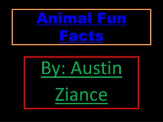 Animal Fun  Facts