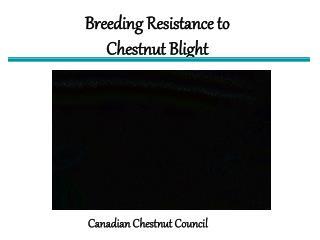 Breeding Resistance to Chestnut Blight