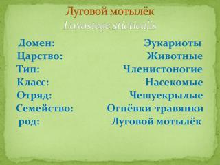 Луговой мотылёк Loxostege  sticticalis
