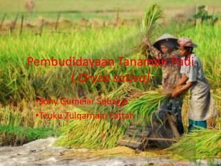 Pembudidayaan Tanaman Padi    (  Oryza sativa)