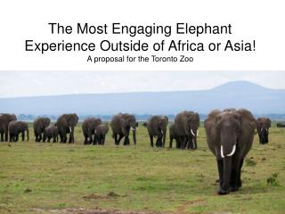 The Most Engaging Elephant Experience Outside of Africa or Asia A proposal for the Toronto Zoo