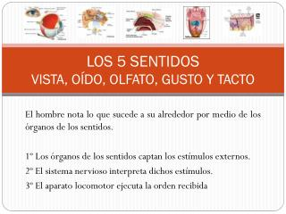 LOS 5 SENTIDOS VISTA, O�DO, OLFATO, GUSTO Y TACTO
