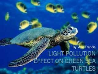 Light Pollution effect on green sea turtles
