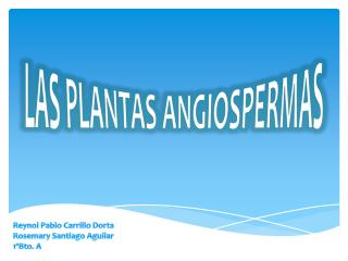Las Plantas Angiospermas