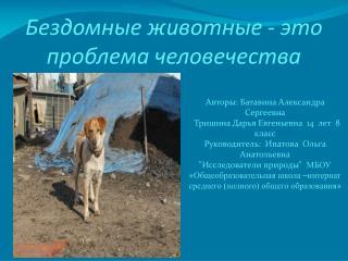 Бездомные животные - это       проблема человечества