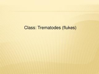 Class: Trematodes flukes