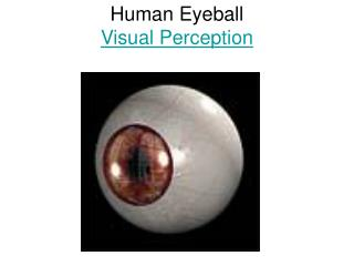 Human Eyeball Visual Perception