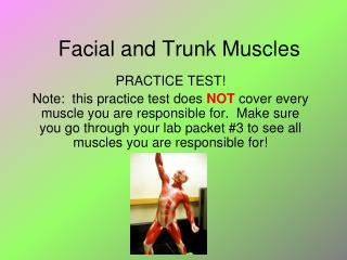 Facial and Trunk Muscles