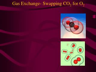 Gas Exchange- Swapping CO 2  for O 2