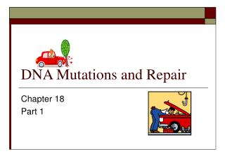 DNA Mutations and Repair