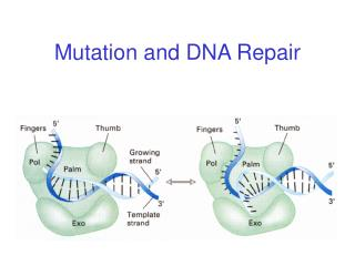 Mutation and DNA Repair