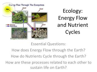 Ecology:   Energy Flow and Nutrient Cycles
